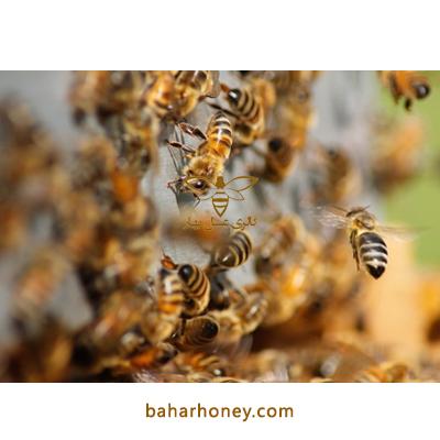 انواع عسل-بهارهانی