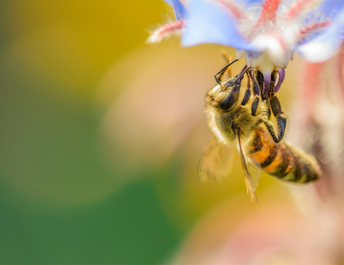 درمان کرونا با عسل